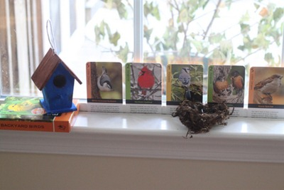 Backyard Birds Cards