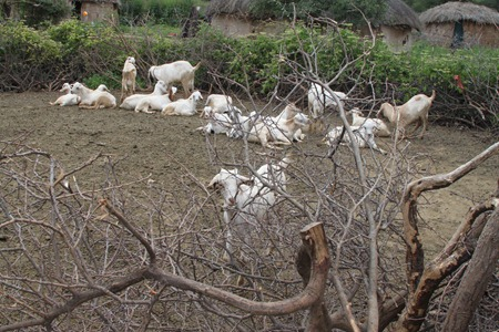 Masai Day 5-8