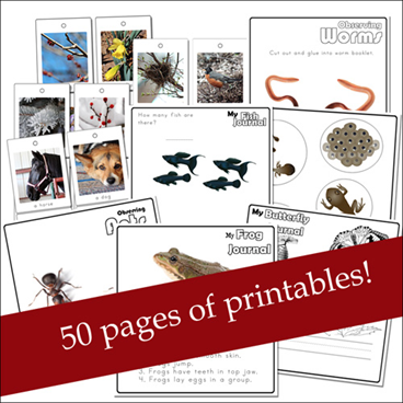 Nature Study Printables for Toddlers and Preschoolers