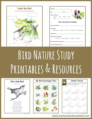 Bird Nature Study Printables from Homeschool Creations