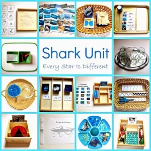 Shark Unit 2