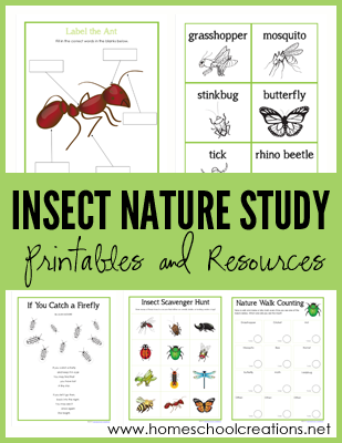 Insect Nature Study Printables from Homeschool Creations