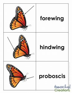 life-cycle-of-a-monarch-butterfly-printables-from-homeschool-creations-vocab-cards-3