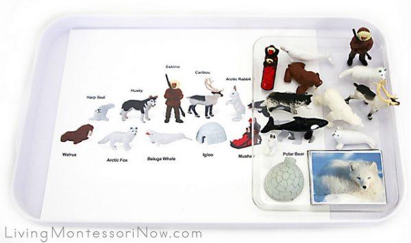free-arctic-animals-printables