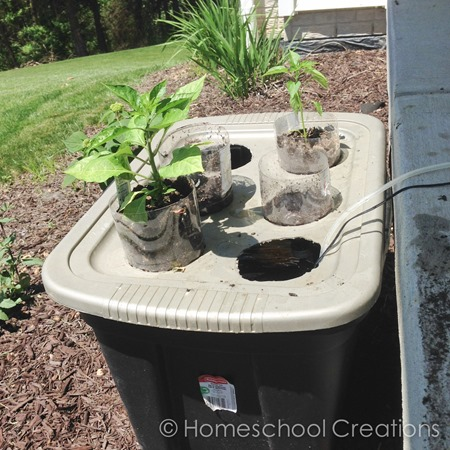 home hydroponics project using plastic bin and soda bottles - North Star Geography activity-1