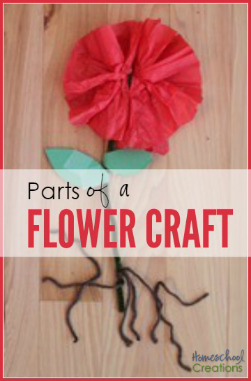 parts of a flower craft - a simple activity to learn about basic flower anatomy