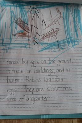 Bird Lapbook-5