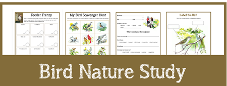 Bird Nature Study Printables sample