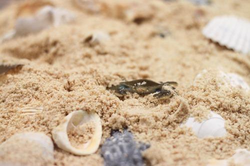 homemade beach sand sensory box-1