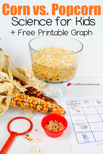 Corn and Popcorn Science Activity A Little Pinch of Perfect 7 copy