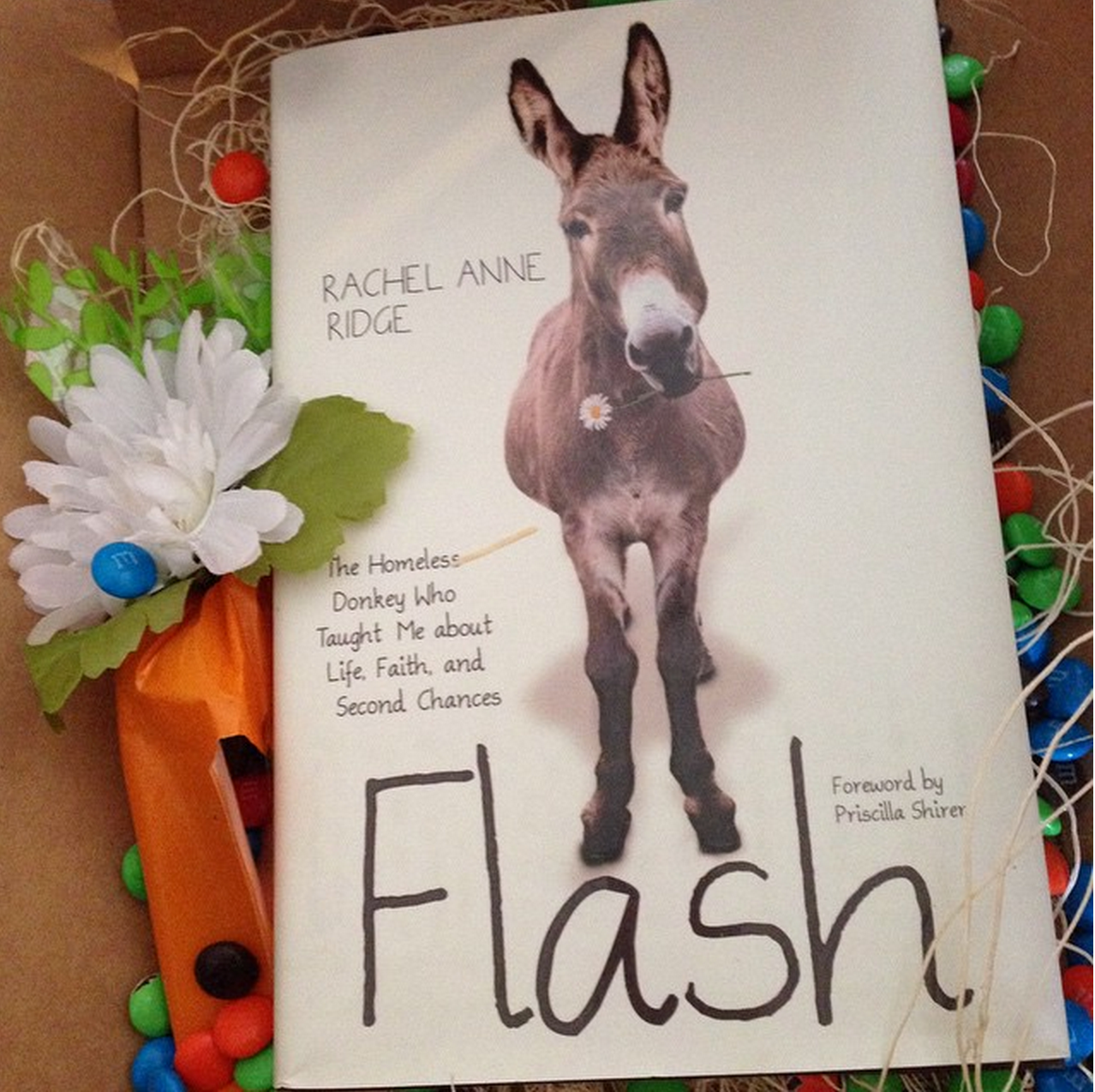 Flash the Donkey