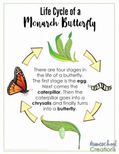 life-cycle-of-a-monarch-butterfly-printables-from-homeschool-creations-poster