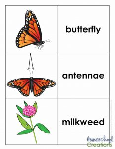 life-cycle-of-a-monarch-butterfly-printables-from-homeschool-creations-vocab-cards-2