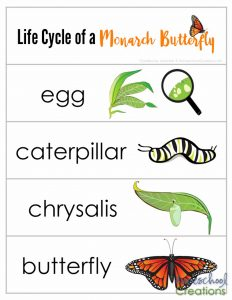 life-cycle-of-a-monarch-butterfly-printables-from-homeschool-creations-word-cards