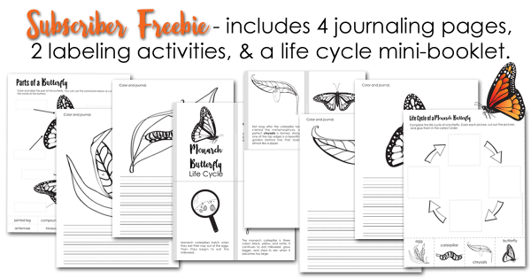 monarch-butterfly-life-cycle-printables-subscriber-freebie