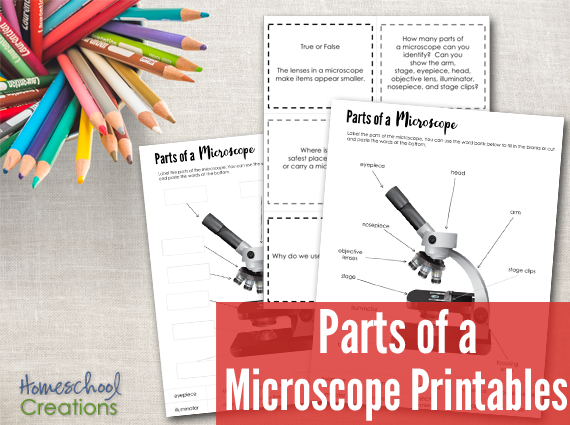 parts of a microscope free printable. Black Bedroom Furniture Sets. Home Design Ideas