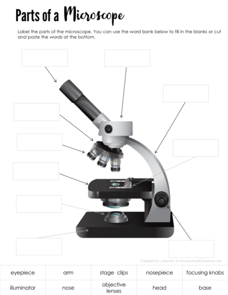 Parts Of A Microscope Free Printable