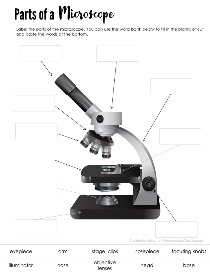 parts of a microscope worksheet - homeschoolcreations net