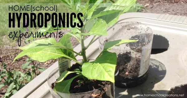 home hydroponics experiments using plastic bins, soda bottles, yarn, and soil
