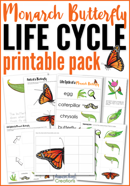 50 page printable pack for Life Cycle of a Monarch Butterfly from HomeschoolCreations.net