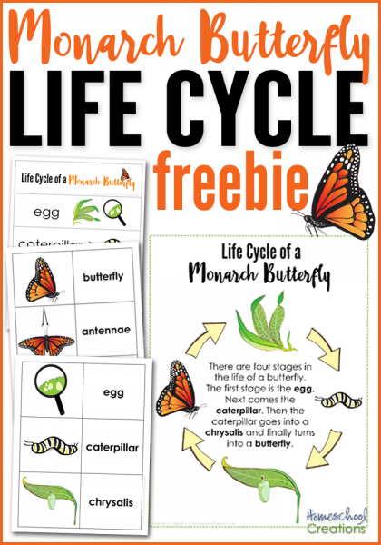 Homeschoolcreations~Monarch Butterfly Life Cycle Printables on Pocket Chart Holiday Special Occasion Calendar Cards