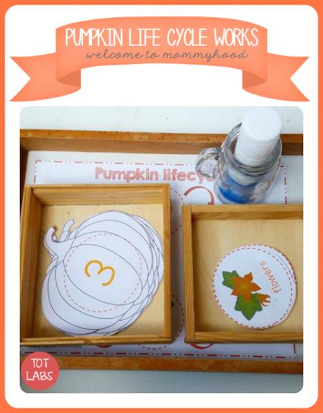 pumpkin-lifecycle-printables