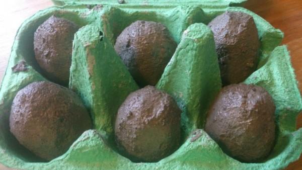 seed eggs